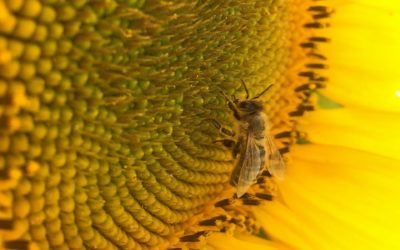 The Electric Side of Pollination